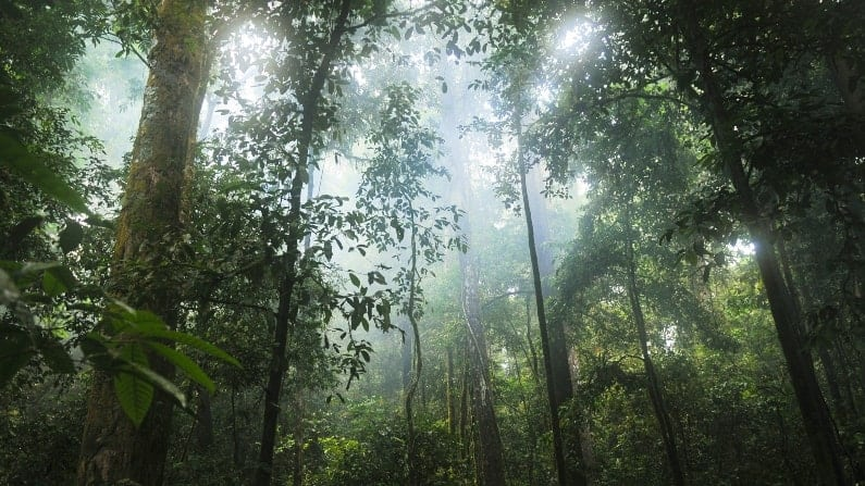 Places to be in AWE in front of nature: Rainforest